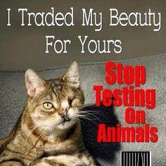animal welfare essay 151 best Animal Rights Petitions, Stop Animal Cruelty Petitions . Racing Extinction, Stop Animal Testing, Stop Animal Cruelty, Sphynx, Cane Corso, Amor Animal, Peta, Animal Welfare, Look At You