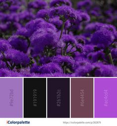 Color Palette Ideas from Plant Purple Flower Image Purple Flowers, Colorful Flowers, Color Combinations, Color Schemes, Purple Color Palettes, Color Meanings, Color Codes, Find Color, Design Seeds