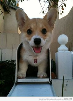 Don't get the wrong mail! the adorable wrong! ( this is so cute! I didn't now they now made corgi travel! First snail mail now Corgi travel! Animals And Pets, Baby Animals, Funny Animals, Cute Animals, Small Animals, Small Dogs, Cute Puppies, Cute Dogs, Dogs And Puppies