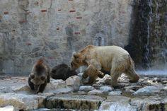 jardim zoologico 38.jpg