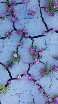 Hintergrundbilder iphone - Purple flowers like Violets growing from sidewalk cracks - - Hintergrundbilder Art Cute Backgrounds, Phone Backgrounds, Cute Wallpapers, Wallpaper Backgrounds, Iphone Wallpapers, Screen Wallpaper, Cool Wallpaper, Nature Wallpaper, Painting Wallpaper
