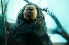 Fotos que muestran la vida de los animales en zoológicos - Antidepresivo