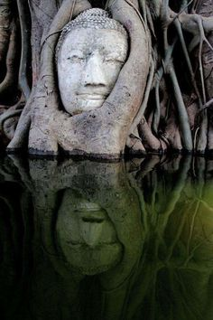 Statue Of Buddha Being Reclaimed By Mangrove Forest Voyage Laos, Oh The Places You'll Go, Places To Visit, Beautiful World, Beautiful Places, Beautiful Dream, Mangrove Forest, Little Buddha, 3d Fantasy