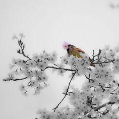 【manahoihoi_color】さんのInstagramをピンしています。 《「かっこええ雀」 ∞ 桜の花を咥えて、かっこいい雀です(^^ ∞ ∞ ∞ @image_and_creation さんから #ピンクバトン 頂戴しました! ありがとうございます! ∞ 撮影したのは今年の春です。 ∞ いつものカラーとモノクロを合わせる手法で、桜のピンクとそれを咥える雀を強調してみました(^^ ∞ ∞ #滋賀 #大津 #皇子山 #皇子山総合運動公園 #公園 #桜 #雀 #スズメ #2016 #春 #ピンク #モノクロ ∞ #キタムラ写真投稿 #東京カメラ部 #はなまっぷ #しがトコ ∞ #gobiwako #IGersJP #Lovers_Nippon #team_jp_flower #tokyocameraclub ∞ #LUMIX #G3》