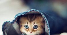 Weil Katzen einfach klasse sind! Deswegen! - Cuteness Overload Bild