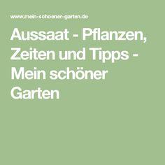 Tomaten Pflanzen: Tipps Zum Setzen, Pflegen, Schneiden   Garten ... Chinakohl Pflanzen Tipps Garten Pflege