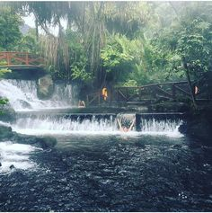 A little #paradise on #earth.  Swimming in the volcano-fed hot springs @tabaconresort via @ruthrod10! #CostaRicaExperts #vacations #CostaRica