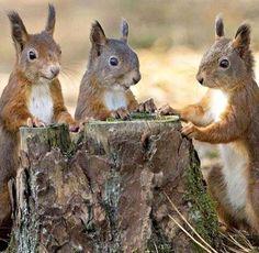 Dinner time?