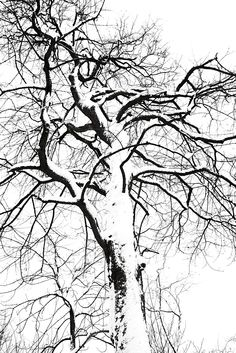 Stefano Mauroner Production, tree, Sarajevo, Snow, black and white, nature, winter, cold