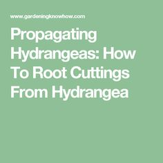 Propagating Hydrangeas: How To Root Cuttings From Hydrangea