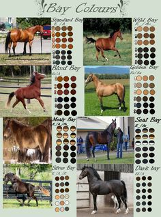 Bay Horse Colours by EdithSparrow on deviantART