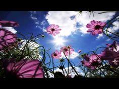 """CANALIZAÇÃO - Sharon Taphorn / Orientação dos Anjos - """"É um mundo maravi..."""