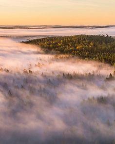 One foggy morning in Hämeenlinna, Aulanko, Finland. Photo by Jari Sokka