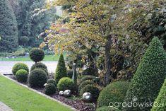 Ogród nie tylko bukszpanowy - część II - strona 306 - Forum ogrodnicze - Ogrodowisko