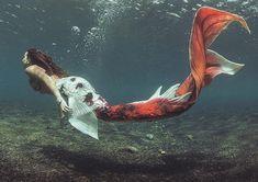 Mermaid Gifs, Siren Mermaid, Mermaid Fairy, Mermaid Pictures, Mermaid Tails For Sale, Mermaid Swim Tail, Mermaid Swimming, Real Life Mermaid Found, Real Life Mermaids