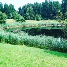 Enjoy Central Swiss nature in the forests! Take a walk to the Bireggwald and Meggerwald Lucerne, Forests, Events, River, Mountains, Nature, Blog, Outdoor, Happenings