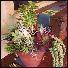 Succulents...