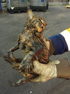 Garbagemen Found Dying Kitten Dumped In Their Truck - We Love Cats and Kittens Animals And Pets, Funny Animals, Cute Animals, Baby Animals, Little Kittens, Cats And Kittens, Tabby Cats, Animal Shelter, Animal Rescue