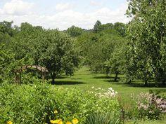 orchard-garden-11.jpg (2592×1944)