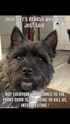 Jabba McCabe Pet Pictures, Cairn Terriers, Losing A Loved One, Mans Best Friend, Babies, Pure Products, Pets, Animals, Babys
