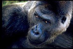 Fukuoka city zoo
