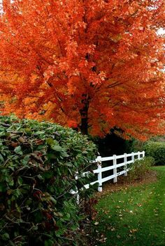 Such a beautiful Tree, mother nature moments Image Nature, All Nature, Seasons Of The Year, Best Seasons, Fall Pictures, Fall Photos, Autumn Scenes, Belle Photo, Autumn Leaves
