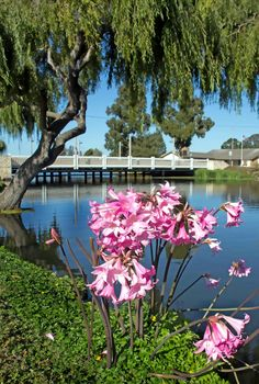 Lake El Estero in Monterey, CA...  Home of Dennis the Menace Park... Rent a paddle boat and explore this horse-shoe shaped lake across the street from the Pacific Ocean.