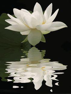 flor de lótus gif - Pesquisa Google