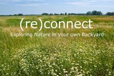 B-Collaborative: (Re)Connecting with Nature: Exploring Biomimicry i...