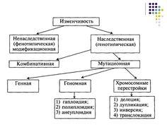 классификация изменчивости: 38 тыс изображений найдено в Яндекс.Картинках