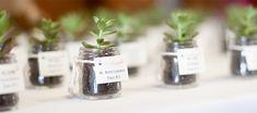 mini plants as wedding favor | Mini succulent plant wedding favors. Love!