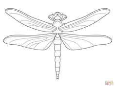 Dragonfly | Super Coloring