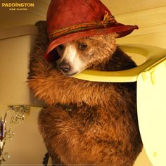 Careful, Paddington! Most household bathrooms aren't meant for such climbing.