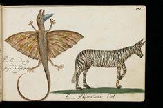 """St. Gallen, Stiftsbibliothek, Cod. Sang. 1311, p. 229 – """"Journal de voyage"""" de Georg Franz Müller, un voyageur alsacien"""
