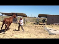 Lunging a Pushy & Dangerous Horse- Stopping Pushy Crowding - Rick Gore Horsemanship - YouTube