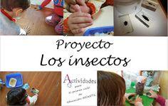 Actividades para el primer ciclo de Educación Infantil: Proyecto los insectos