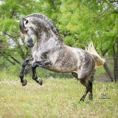 Looks like a horse playing and having a good time