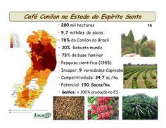 Caffè Robusta: raccolto in Contrazione - Materie Prime - Commoditiestrading