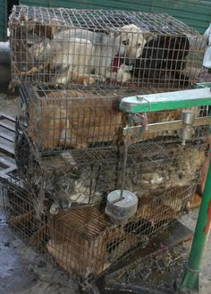 Any fur bought from CHINA supports the slaughter of TWO million dogs and cats each year.