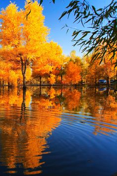Fall Reflection iPhone Wallpaper and iPhone SE Wallpaper Cute Fall Wallpaper, Autumn Leaves Wallpaper, Wallpaper Ideas, Iphone Wallpaper Herbst, Wallpaper Iphone Cute, Autumn Scenery, Autumn Trees, On Golden Pond, Desktop Images