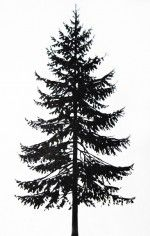 pine tree silhouette - Google Search