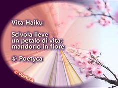 Vita Haiku