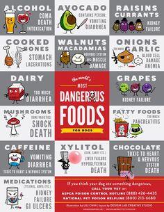 dangerous-dogfoods.jpg (600×776)