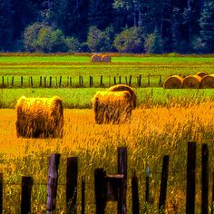 Idaho Hay Bales...love love love!!