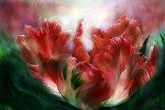 carol cavalaris | Exquisitas flores de Carol Cavalaris