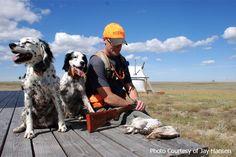 Orvis endorsed wingshooting in Montana, Pheasant Hunting, Bird Hunting, Upland Hunting Pheasant Hunting, Grouse, Wild Birds, Habitats, Montana, Sage, North America, Safari, Tent