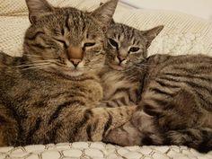 kitten-in-love.jpg