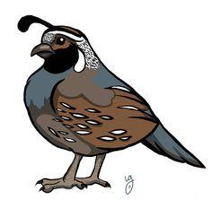 Quail Cartoon Drawings | Cartoon Quail To draw a cartoon quail.