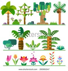 Tropical plants. Different types of trees, flowers, bushes. Vector flat  illustrations - stock vector