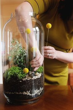 Tall Glass Jar (this is the small one!)  • rocks and stones as filler  • rocks and stones as decoration  • activated charcoal  • potting soil  • plants (ferns and mosses)  • preserved moss  • billy buttons (Craspedia)  layer of rocks-layer of charcoal-layer of layer of small rocks-layer of soil-
